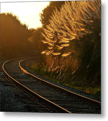 Seacliff Tracks At Sunset Metal Print by Amelia Racca