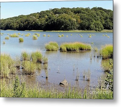 Metal Print featuring the photograph Seagrass by Ed Weidman