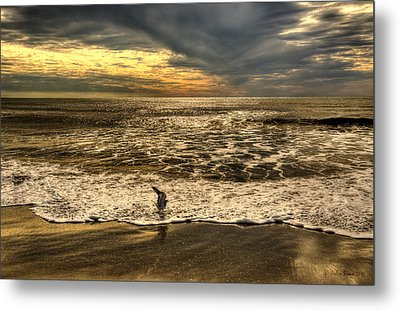 Metal Print featuring the photograph Seagull Sunset Bath by Julis Simo