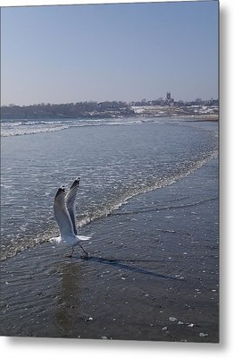 Metal Print featuring the photograph Seagull 1 by Robert Nickologianis