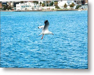 Seagull At St Kilda Metal Print by Yew Kwang