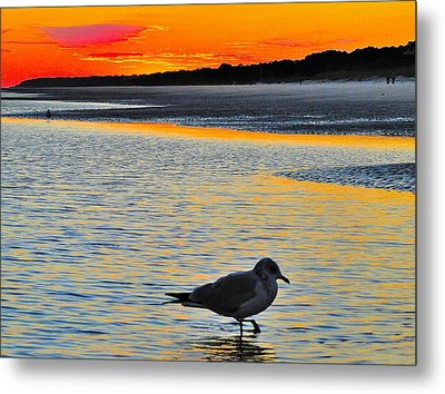 Seagull At Sunset Metal Print by Cindy Croal