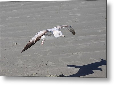 Metal Print featuring the pyrography Seagull by Chris Thomas