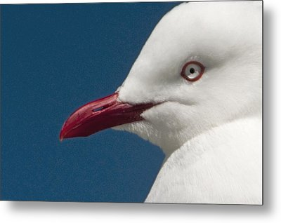 Metal Print featuring the photograph Seagull by Dennis Cox WorldViews