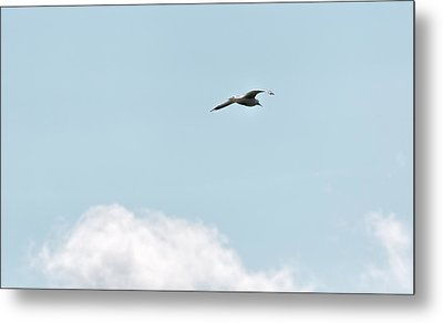 Metal Print featuring the photograph Seagull Flying High by Leif Sohlman