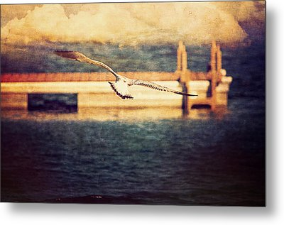 Seagull Flying Metal Print by Maria Angelica Maira