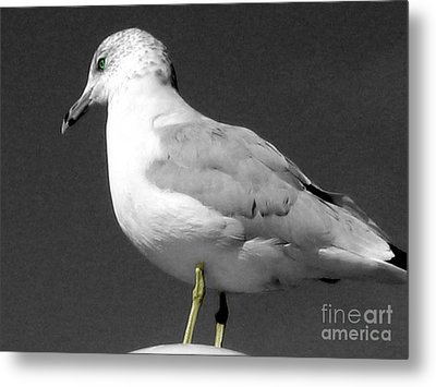 Metal Print featuring the photograph Seagull In Black And White by Nina Silver