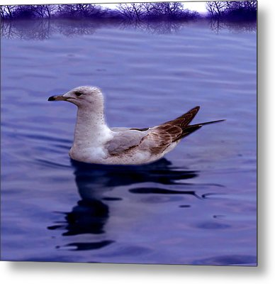Seagull In Blue Metal Print by Sakna T