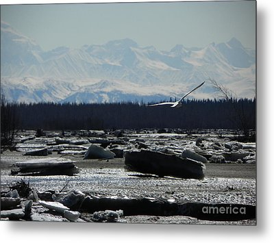 Seagull Metal Print by Jennifer Kimberly