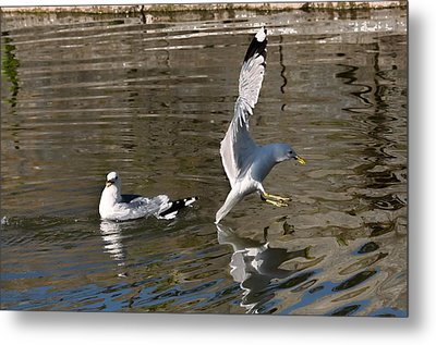 Seagull Metal Print by Leif Sohlman