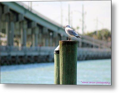 Seagull On The Dock Metal Print