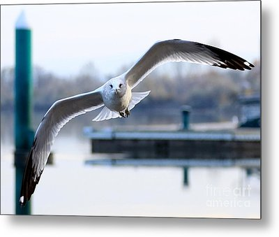 Seagull Over The Pier Metal Print by Carol Groenen