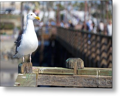 Metal Print featuring the photograph Seagull by Robert  Aycock