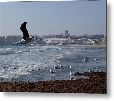 Metal Print featuring the photograph Seagull by Robert Nickologianis