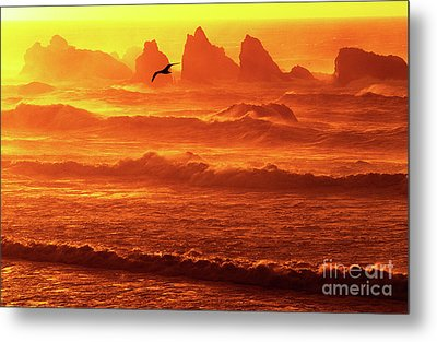 Metal Print featuring the photograph Seagull Soaring Over The Surf At Sunset Oregon Coast by Dave Welling