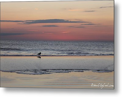 Metal Print featuring the photograph Seagull Strolls The Seashore by Robert Banach
