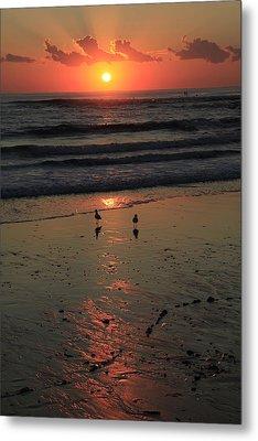 Seagull Sunrise Metal Print by Noel Elliot