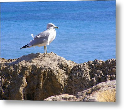 Metal Print featuring the photograph Seagull by Artists With Autism Inc