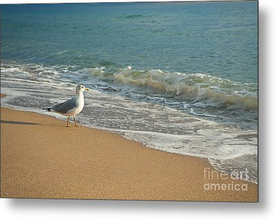 Seagull Walking On A Beach Metal Print by Sharon Dominick