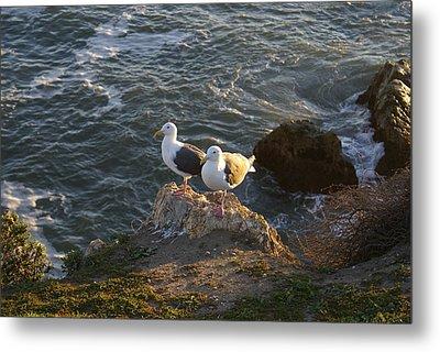 Seagulls Aka Pismo Poopers Metal Print by Barbara Snyder