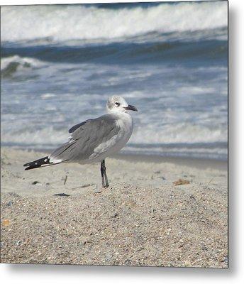 Seagulls At Fernandina 2 Metal Print by Cathy Lindsey