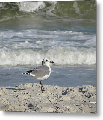 Seagulls At Fernandina 6 Metal Print