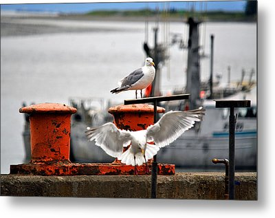 Seagulls Expression Metal Print by Debra  Miller