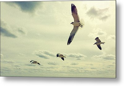 Metal Print featuring the photograph Seagulls In Flight by Bradley R Youngberg