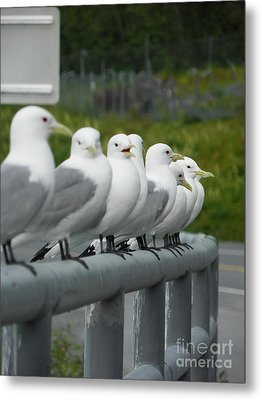 Seagulls Metal Print by Jennifer Kimberly