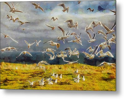 Seagulls Of Protection Island Metal Print by Kai Saarto