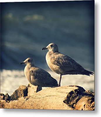 Metal Print featuring the photograph Seagulls On A Beach by Yulia Kazansky