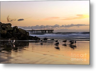 Seagulls On The Coast Metal Print by Mike Ste Marie