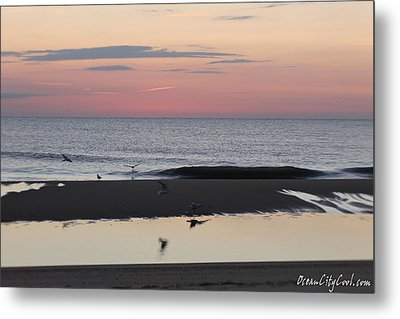 Metal Print featuring the photograph Seagulls Sea And Sunrise by Robert Banach