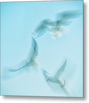 Seagulls  Metal Print by Stelios Kleanthous