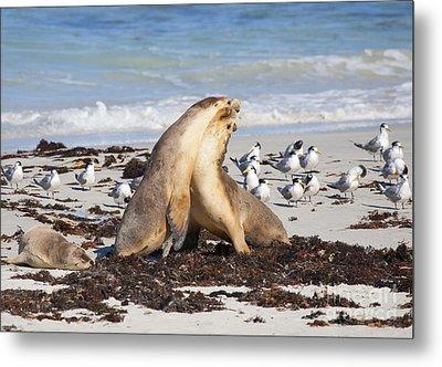 Seal Beach Battle Metal Print by Mike Dawson