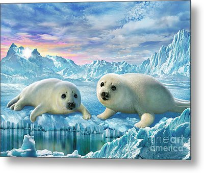 Seal Pups Metal Print by Adrian Chesterman