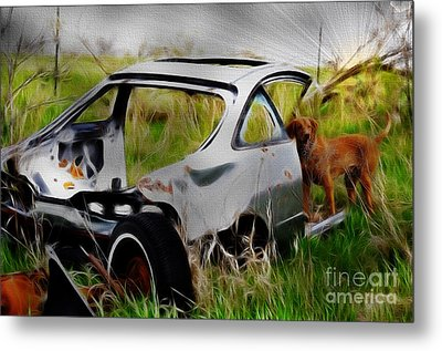 Metal Print featuring the photograph Search And Rescue by Liane Wright