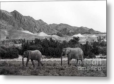 Searching Metal Print by Susan Chandler