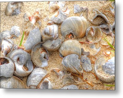 Seashell 01 Metal Print