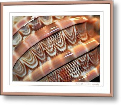 Seashell Abstract 2 Metal Print by Kaye Menner