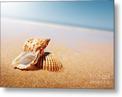 Seashell And Conch Metal Print by Carlos Caetano