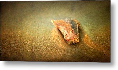 Metal Print featuring the photograph Seashell by Joye Ardyn Durham