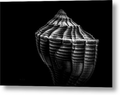 Seashell On Black Metal Print by Bob Orsillo