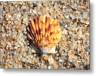Seashell On Sandy Beach Metal Print by Carol Groenen