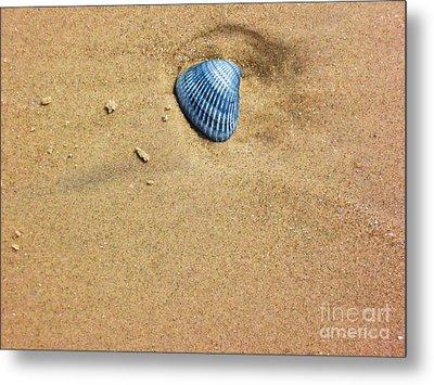 Seashell Metal Print by Venus