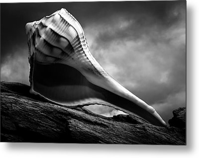 Seashell Without The Sea 3 Metal Print by Bob Orsillo