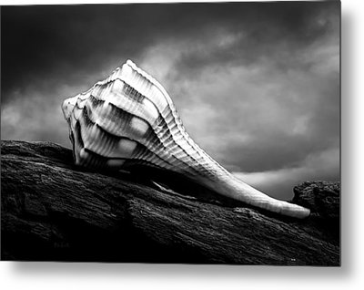 Seashell Without The Sea Metal Print by Bob Orsillo