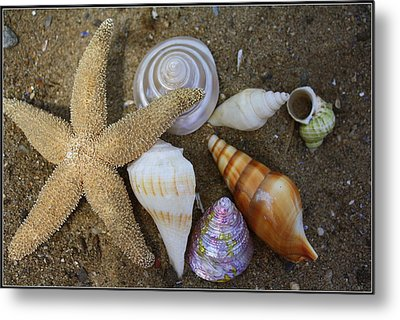 Seashells And Star Fish Metal Print by Dora Sofia Caputo Photographic Art and Design