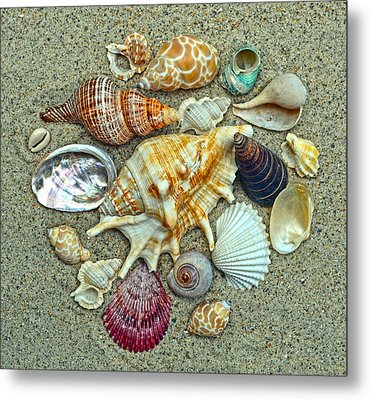 Seashells Collection Metal Print