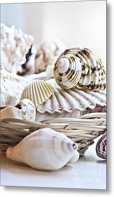 Seashells Metal Print by Elena Elisseeva